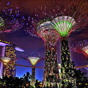 gardens by the bay  by Jun Hao - City,  Street & Park  City Parks