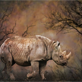 rhino on the walk.jpg
