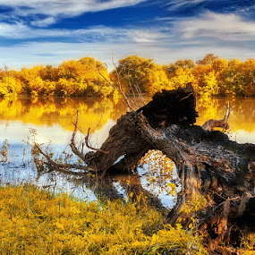 Yellow fantasy by Alexander Bakhur - Nature Up Close Trees & Bushes ( world_is_yellow,  )