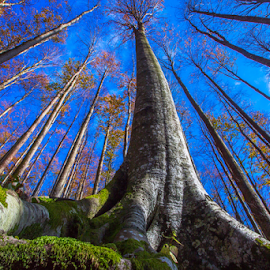 Beech tree by Stanislav Horacek - Nature Up Close Trees & Bushes