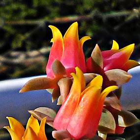 Çiçek by Recep Cenbek - Flowers Flower Gardens ( bahçe çiçeği )