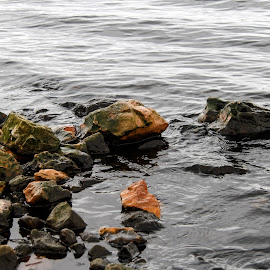 You Can Lead a Rock to Water by Rob Heber - Nature Up Close Rock & Stone ( relfections, natural light, detail, moss, rocks in water, rough ground, lake shore, choppy waters, clear water, nature, pool, ripples, slippery, wet, boulder in water, rocks, water, boulders, waves, texture, stones in water, lake, beauty in nature, reflecting, lake water, rough texture, outdoors, stones, growth )