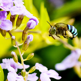 Bee Bee by Vinoth Kumar - Nature Up Close Flowers - 2011-2013 ( dream creation, bee, vinoth, closeup, bee closeup )