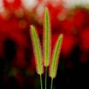 by Nani Garu - Nature Up Close Leaves & Grasses