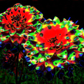 Psychedelic Dahlia 1 by RMC Rochester - Digital Art Abstract ( macro, random, flowers, nature, abstract, manipulation, colors,  )