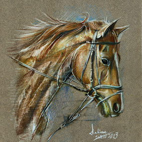 Horse Drawing by Daliana Pacuraru - Drawing All Drawing ( pastel, daliana pacuraru, horse, crayons, portrait, drawing,  )