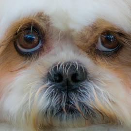 by Albin Bezjak - Animals - Dogs Portraits