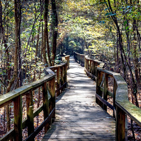 Congaree Boardwalk by Serge Skiba - Landscapes Forests ( congaree, up close, walking, national, bocah, canvas, forest, blur, leaf, sunlight, sun, print, boardwalk, close, up, macro, autumn, trees, commercial, walk )