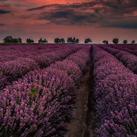 Deep purple by Svetlomir Kolev - Landscapes Sunsets & Sunrises ( sunset, landscape, lavender )