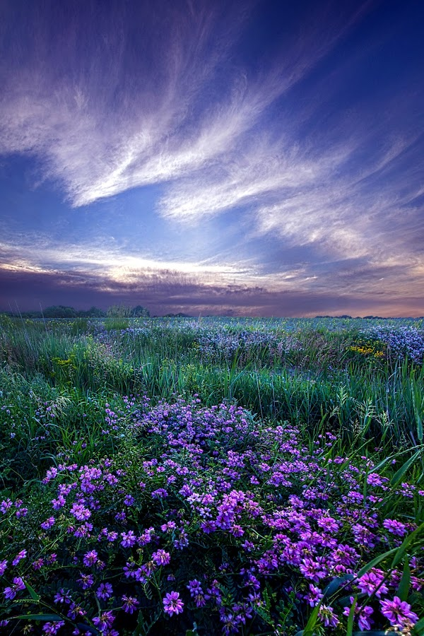 Lord Don't Go by Phil Koch - Landscapes Prairies, Meadows & Fields ( vertical, travel, yellow, sky, nature, weather, light, orange, colors, twilight, art, mood, journey, horizon, portrait, country, dawn, environment, season, serene, outdoors, lines, natural, hope, inspirational, wisconsin, ray, landscape, spring, sun, photography, life, emotions, horizons, inspired, clouds, office, park, heaven, beautiful, scenic, living, morning, field, blue, sunset, amber, peace, meadow, beam, sunrise, earth )
