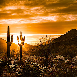 by Ken Mickel - Landscapes Deserts ( clouds, topaz detail, desert, plants, topaz clarity, buckhorn cholla, landscape, buckeye, photography, nature, landscape/desert, cacti, topaz, sunsets, sunset, outdoors, arizona, cloudy, skyline regional park, cholla, cactus, saguaro )