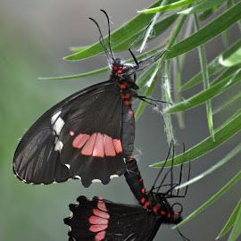 Butterfly Love by Dawn Hoehn Hagler - Animals Insects & Spiders ( butterfly, butterflies, insects, insect, butterfly wonderland )