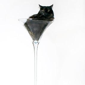 by Debi Tipton - Animals - Cats Portraits