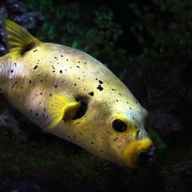 Dogfish by Yanti Hadiwijono - Animals Fish