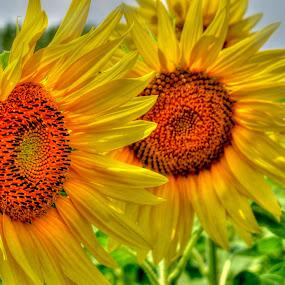 by Luna Sol - Flowers Flower Gardens