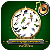App Canto de pássaro do brasil APK for Windows Phone