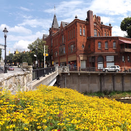 Bush Arcade Building by Dale Moore - Buildings & Architecture Architectural Detail ( yellow flowers, building, brick, buildings, pennsylvania, yellow, flowers, yellow flower, flower )