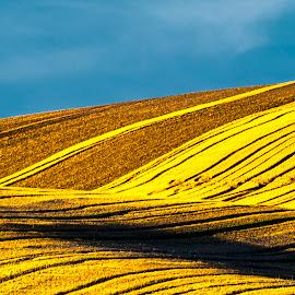 Moravian Fields by Stanley P. - Landscapes Prairies, Meadows & Fields ( moravian, fields )
