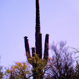 black canyon by Stacey Brooks - Landscapes Deserts ( desert, castus, pretty, tall )