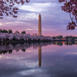 Capital Moment by Mike Lindberg - Landscapes Waterscapes ( dc, reflection, sunset, stone, washington monument, monument, washington dc, nation's capital, tidal basin, cherry blossoms )