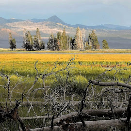 The vastness of Yellowstone by Mary Gallo - Landscapes Prairies, Meadows & Fields ( mountains, yellowstone, nature, wildlife, landscape, fields )