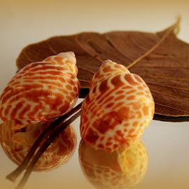 Harmony by Prasanta Das - Artistic Objects Still Life ( sea shells dried leaf, composition )