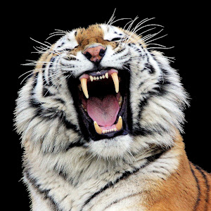 1-1-Tiger Marwell.JPG
