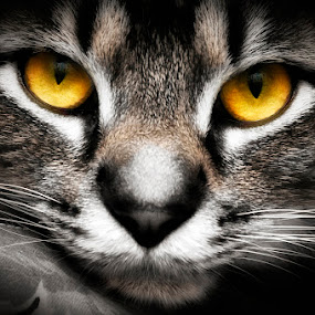 In The Eyes Of A Cat by Irma Mason - Animals - Cats Portraits ( cat, animals, nature, feline, tabby, eyes,  )