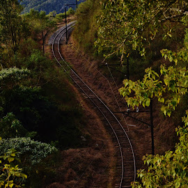 Campos do Jordão SP Brazil  by Marcello Toldi - Transportation Railway Tracks