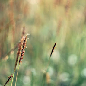 by Muhamad Soleh - Nature Up Close Leaves & Grasses