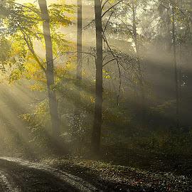 Sluneční paprsky by Jana Černošková - Landscapes Forests ( sunrays )