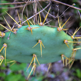 by Maria Medina - Nature Up Close Other plants