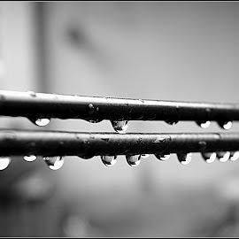 Rain drops by Shubhasis Mazumdar - Abstract Water Drops & Splashes ( water, abstract, macro, black and white, abstract art, droplet, drop, drops, rain, droplets,  )