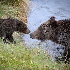 by Ryan Smith - Animals Other Mammals