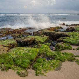 slow water by Janet Marsh - Landscapes Beaches ( slow water, beach, sunrise, rocks,  )