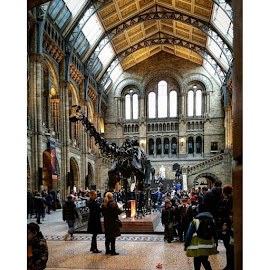 Lovely London Natural History Museum by José M G Pereira - Instagram & Mobile Android ( josemgpereira, putney, naturalhistorymuseum, indoorarchirecture, geosciences, dinosaurs, culture, knowledge )
