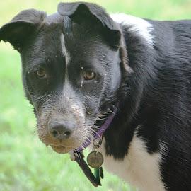 Mud bath by Dee Schindler VanBilliard - Animals - Dogs Puppies ( mud, dirty, funny, mudbath, puppy,  )
