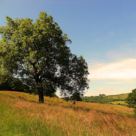 English Country Meadow by Helen Roberts - Landscapes Prairies, Meadows & Fields (  )