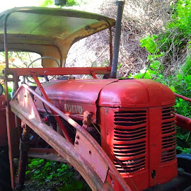 The old red Volvo tractor by Liliana Lesu - Transportation Other ( red, old tractor, volvo, tractor )