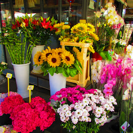 by Alenka Predic - City,  Street & Park  Markets & Shops