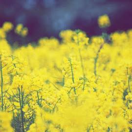 Wild flowers by Janet Skoyles - Flowers Flowers in the Wild (  )
