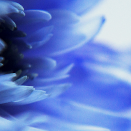 Floral studies  by Bethany Fuller - Abstract Macro ( abstract, detail, floral photography, macro photography, blue flower )