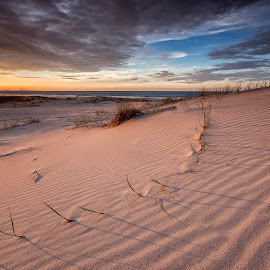 Afternoon Dune by Steve Badger - Landscapes Beaches ( dunes, gold coast, australia )