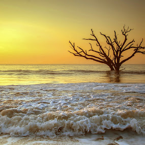 Golden Carolina Sunrise by Serge Skiba - Landscapes Beaches ( old, reflection, botany, erosion, colorful, ocean, skeleton, beach, yellow, boneyard, sun, island, weathered, sky, tree, edisto, oak, tide, gold, east, clouds, water, sand, waves, horizon, sea, scenic, south carolina, tides, dawn, bay, color, scene, sunrise, eastern, view )