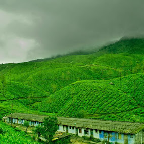 Greens by Aravindh Ganesh - Landscapes Mountains & Hills ( nature, green, color, food, concept )