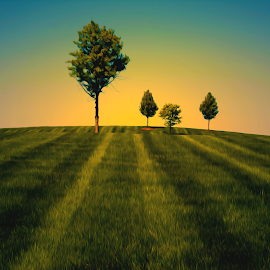 Trees 100 by Kevin Lucas - Digital Art Places ( lawn, painterly, grass, sunset, trees, kevin lucas, surreal, eye statements )