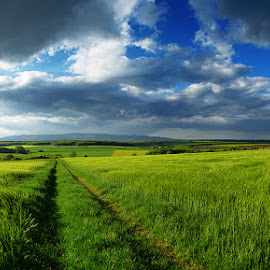 Hungarian skies pt.196. by Zsolt Zsigmond - Landscapes Prairies, Meadows & Fields ( clouds, wheat, sky, path, panorama )