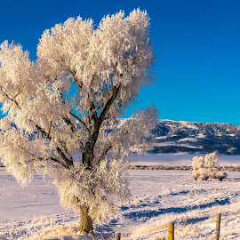 Frozen Tree by Chad Roberts - Nature Up Close Trees & Bushes ( winter, tree, cold, snow, frost, frozen )