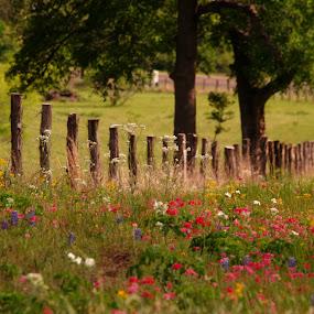 Blooming fencline by Brenda Shoemake - Flowers Flowers in the Wild (  )