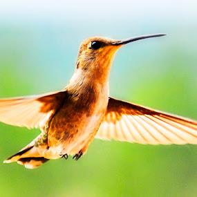 Caught in Flight by Annette Turner - Animals Birds